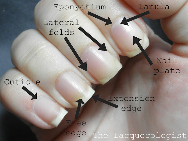Nail Anatomy Casual Contrast